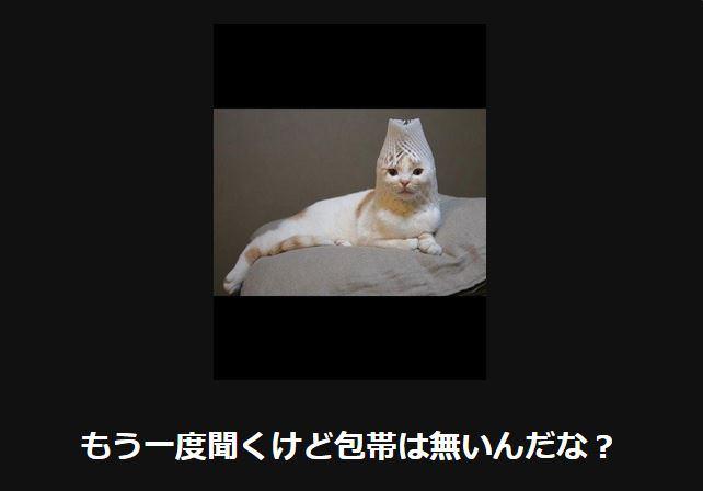 大喜利 猫13