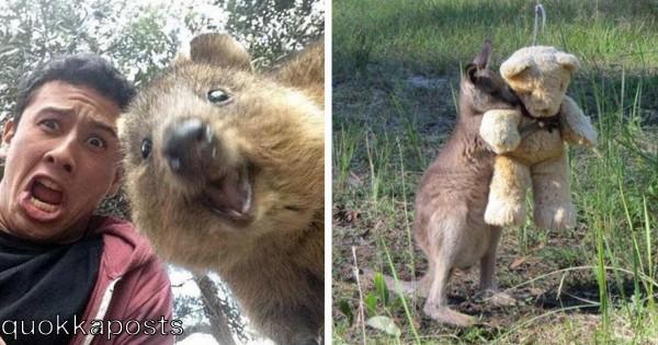 悶絶注意!オーストラリアに行ったら帰って来られない理由10選