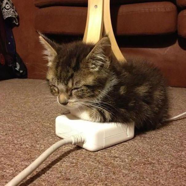 猫 暖かい1