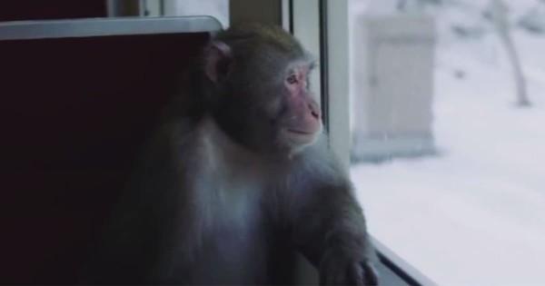 目的地はどこ?仲間と離れ一人旅する猿から漂う哀愁がハンパない