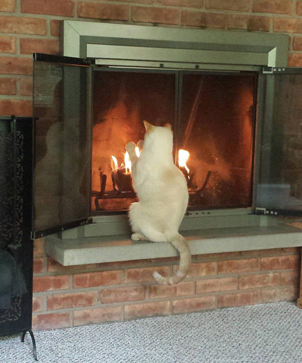 猫 暖かい11