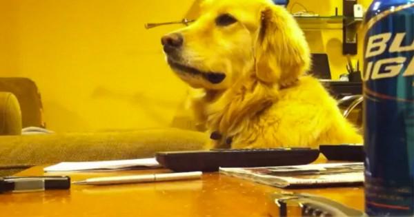 【かわいい】ギターをやめると、あからさまにムスッとする犬が世界で話題に!