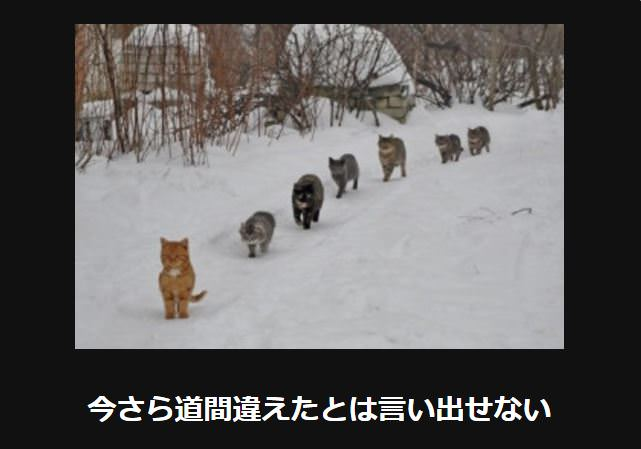 大喜利 猫7