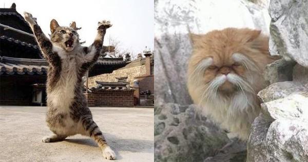 能あるネコは爪を隠す? 実はニャンコは太極拳を使えるかもしれない11選