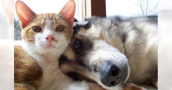 友情は種族を超える!いつも一緒の「犬猫コンビ」にこっちが癒される22選