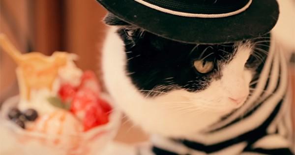 もし猫が女子会を開いたら?「猫女子トーク」がゆるすぎてウケた