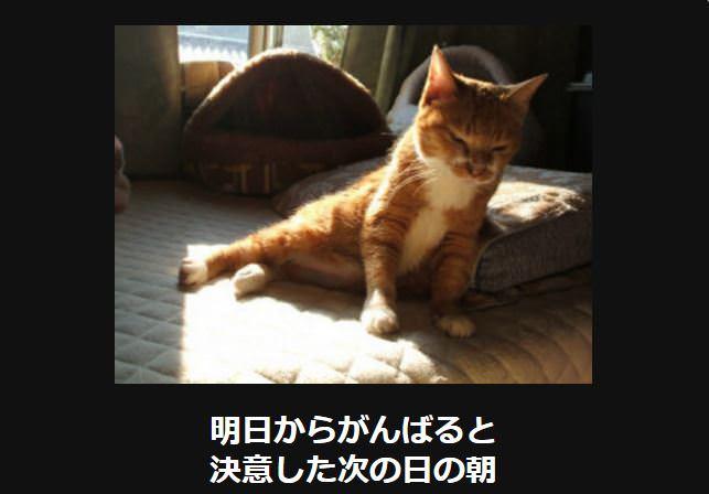 大喜利 猫33