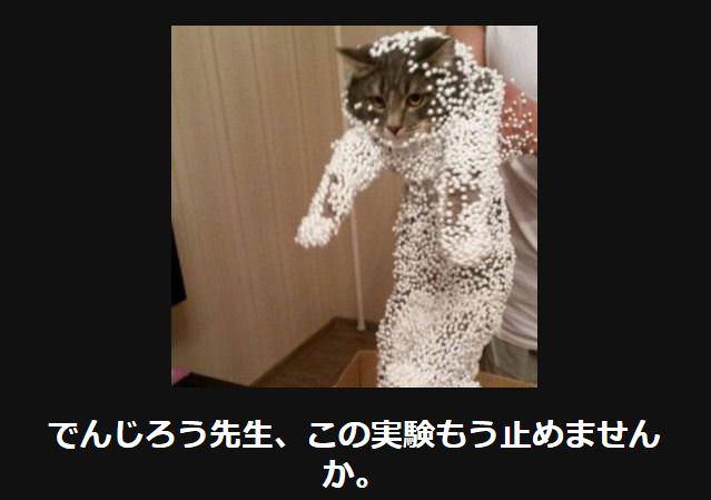 大喜利 猫25
