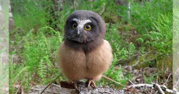 くりんくりんな瞳がたまらない!赤ちゃんフクロウの可愛さにメロメロ12選