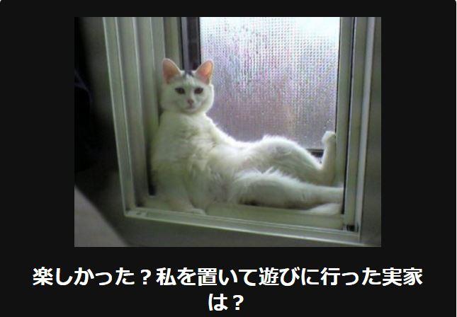 大喜利 猫39