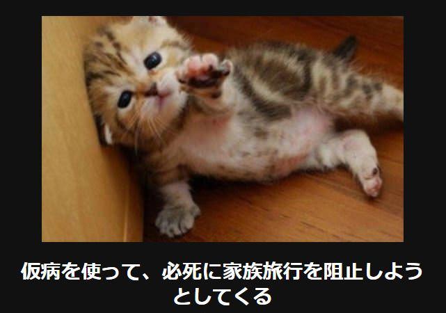大喜利 猫36