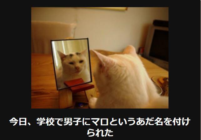 大喜利 猫34