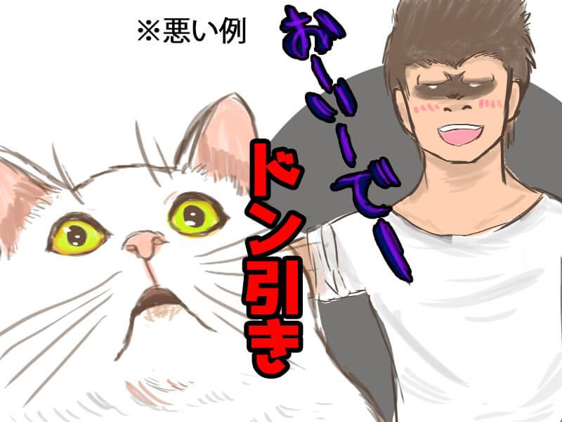 猫好かれる7