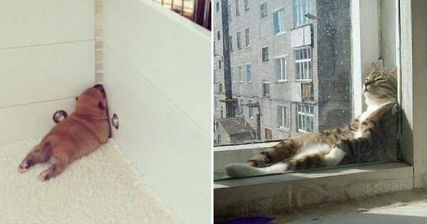 ご主人の買ったベッドそっちのけ。動物たちの奇想天外な「寝場所」15選