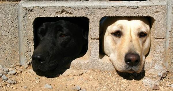 「ご主人行かないで」壁から顔を出す犬の執念が激しい12選