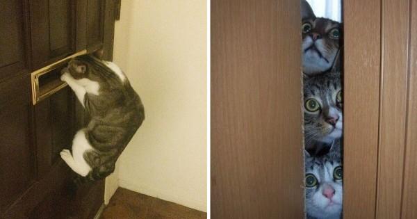 猫はのぞき魔である12選
