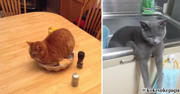 猫界の事件はキッチンで起きている13選