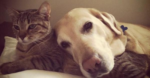 猫と犬を一緒にしてはいけない16の理由