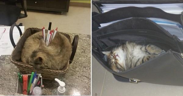 ネコがいちばんイキイキしているのは職場かもしれない13選