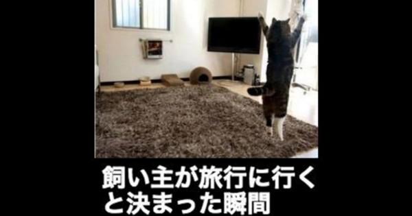 【笑う門には猫がいる】センスしか感じない猫の大喜利13選