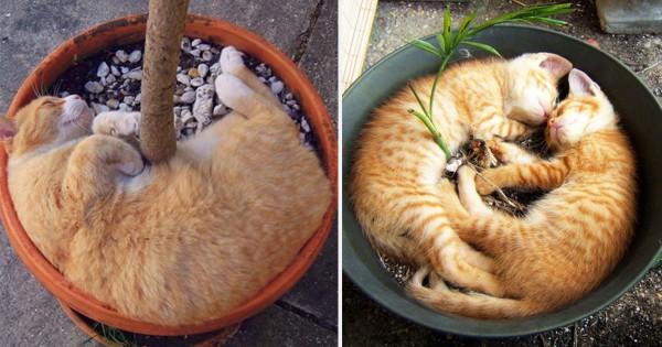 【30連発】植木鉢で昼寝する猫のフィット感がヤバい