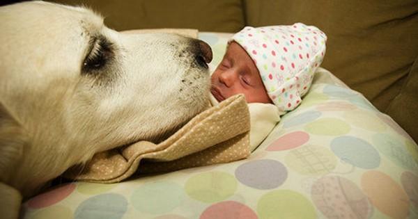 犬は人間に勝るとも劣らない母性本能があるとわかる画像13選