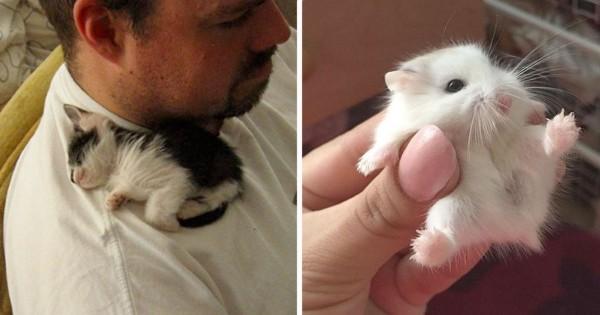 優しく触らないと壊れちゃいそう!動物の赤ちゃんはやっぱり天使だとわかる11選