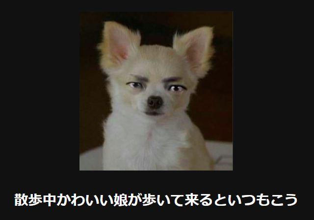 大喜利 犬44