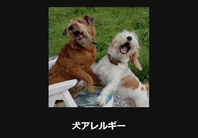 大喜利 犬43