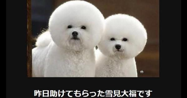 犬がいれば人生が5倍楽しくなる!あなたを笑顔にする犬の大喜利11選