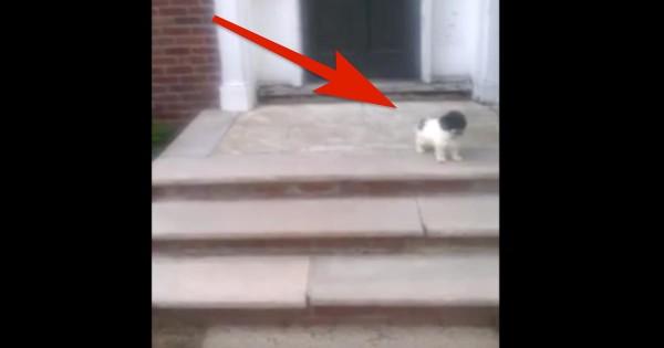 階段を降りるのが怖い子犬。どうするか見守っていたら、予想外の行動に...(21秒)