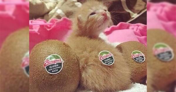 キウイフルーツみたいな動物