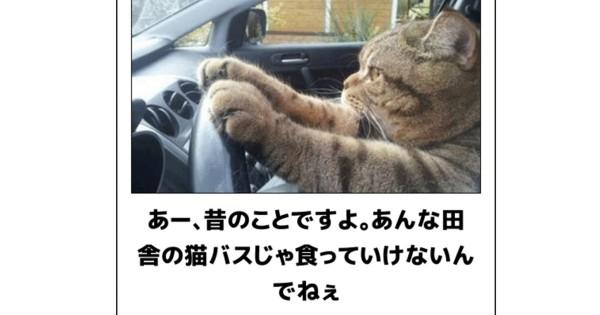 不意打ち注意!いきなりツボを突いてくる猫のボケて21選