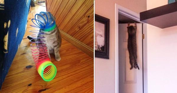 自分で自分を窮地に追い込んだ猫10選
