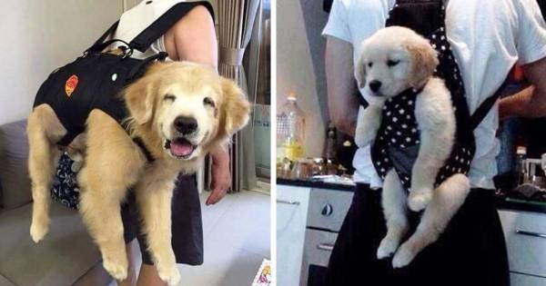 【この情けなさがたまんない】おんぶされた犬が愛おしくて母性本能が爆発11選