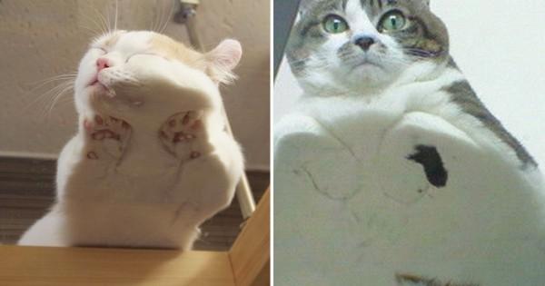 【この良さがわかれば猫好き認定】ガラステーブルの下から見た猫に興奮15選