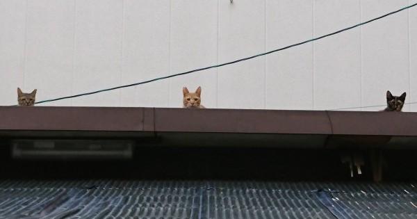 【猫は3匹集まると悪巧みをする】良からぬことを考えているに違いないトリオ・ザ・猫