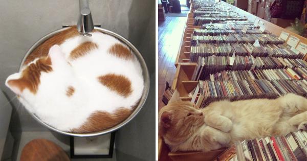 ほんとどこでも寝れるな!(笑) 猫にベッドは不要である10選