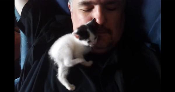 甘えん坊の子猫ちゃんから全身を使ったスリスリ攻撃されるおじさんが羨ましい