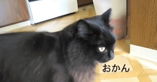 猫 おかえり4