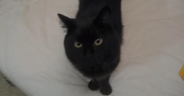 猫 おかえり1