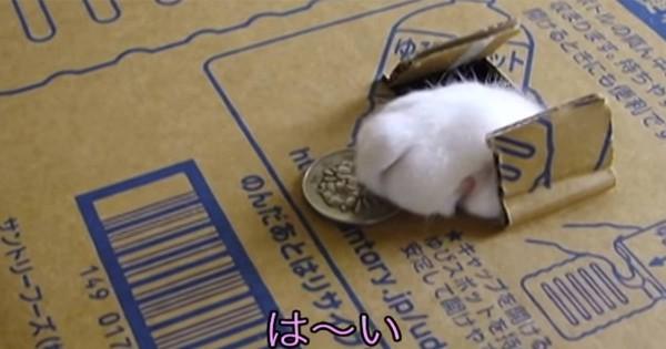 しっかり預かりました(=^・^=)小銭を置くと猫の手が持ってくリアルな貯金箱