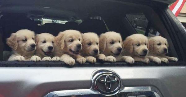 犬好き全員集合!トランクから顔を出す犬たちが想像以上にかわいい11選