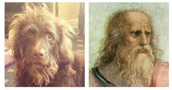 【昔の哲学者と完全一致】偶然他のものに見えてしまった犬8選