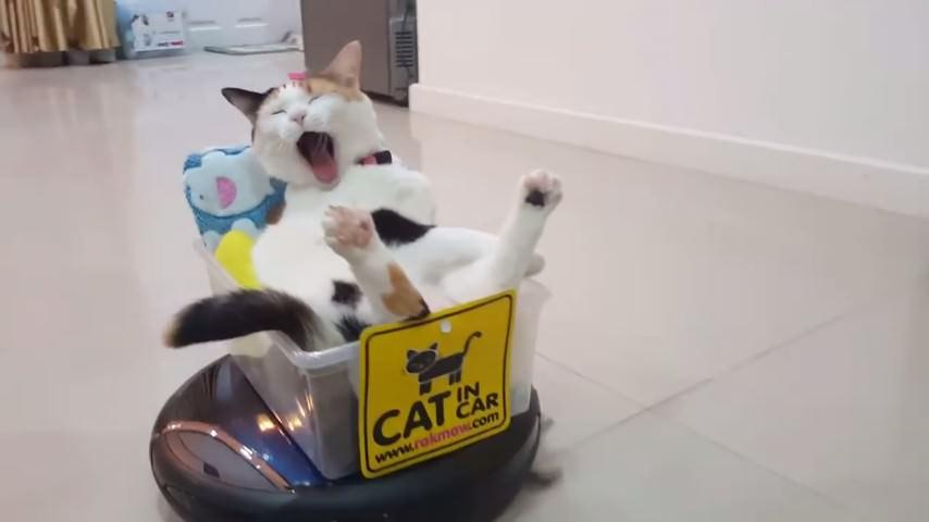猫 ルンバ