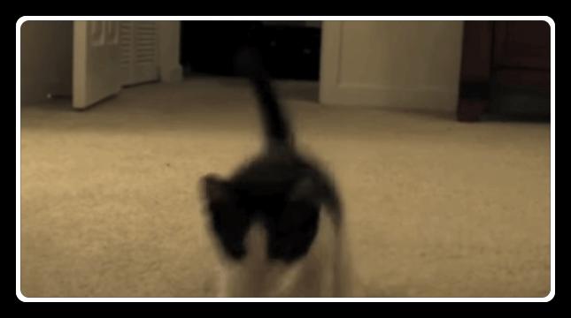 猫 忍び足2