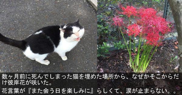 出会いも別れも不思議だった。「なかじまさん」と呼ばれた猫と高校生の涙の物語