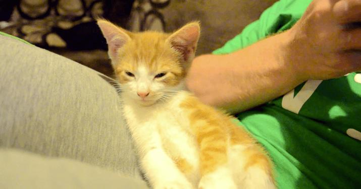 猫 寝落ち2