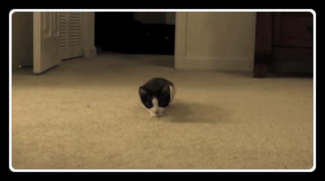 猫 忍び足1