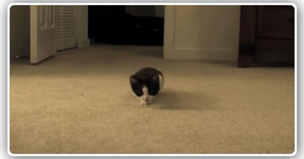 忍び足で子猫がジワジワ近寄ってきて、最後飛びつかれる動画にキュン(25秒)